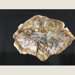 Image For: Large Slice of Petrified Wood