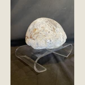 Click here to go to the Pre-Historic Fossilized Turtle page