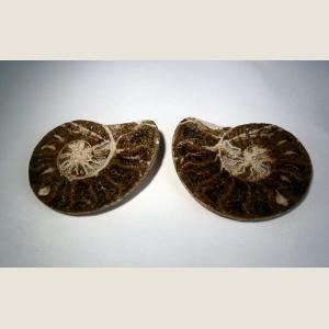 Image For: Pre-Historic Ammonite Fossil